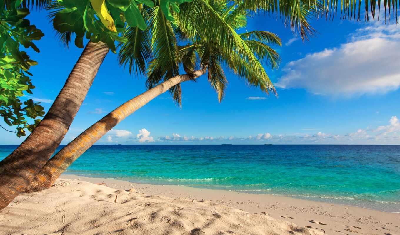 пляж, море, landscape, tropic, palm