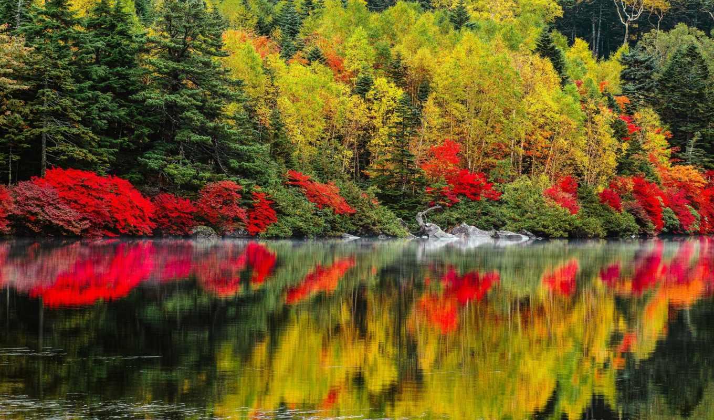 природа, осень, озеро, деревья, пейзаж, леса, картинка,