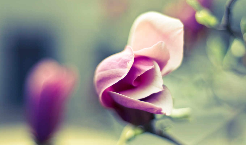 нежность, люди, цветы, качестве, лепестки,