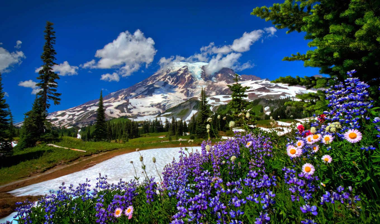 cvety, горы, природа, дорога, landscape, снег, заснеженных, гор, fone, вершины,