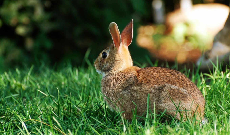 кролик, desktop, wild, код, bunny, rabbits,