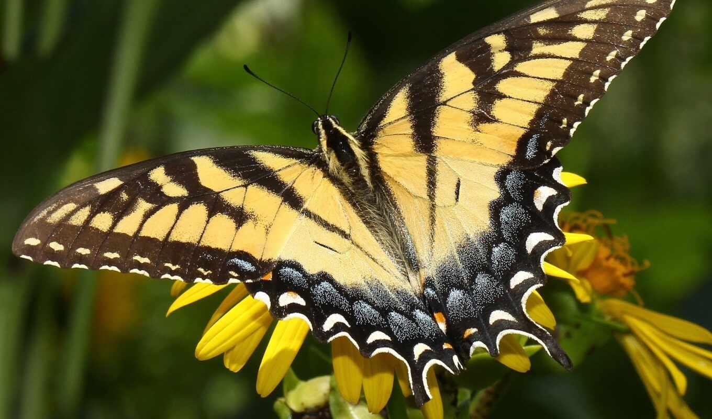 бабочка, цветы, makryi, собака