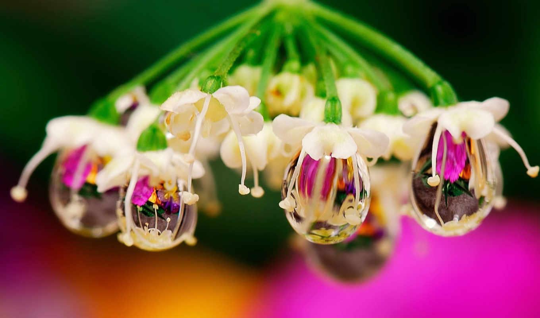 gooollll, пост, макрофото, прекрасных, цветы, макро,