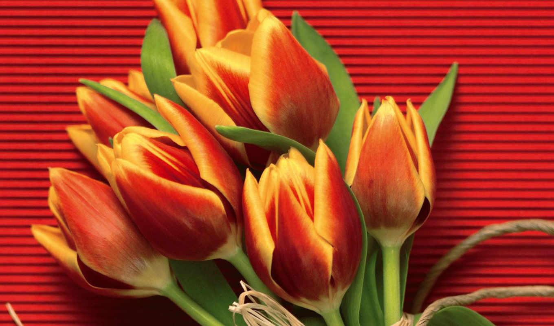 рождения, днем, natalia, поздравляем, тебя, поздравляю, поздравления,