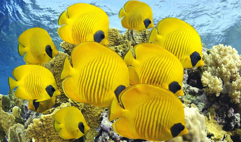 море, pisces, ocean, красивые, рыбки, природа, кораллы, world, underwater, diving, самые,