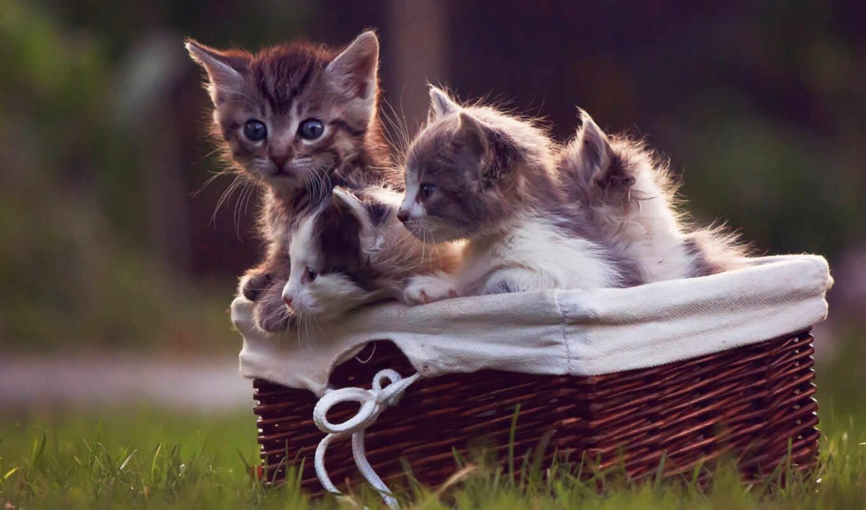 котенок, little, кот, корзина, трава, animal, sit, kotenk, травка, sweetheart