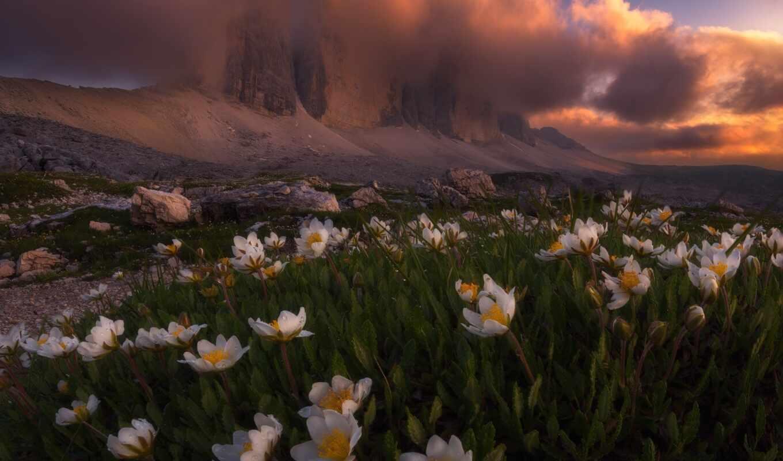 крокус, снег, гора, альп, цветы, лампочка, весна, duvar