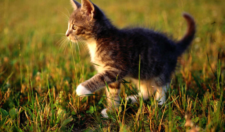котенок, трава, nature, животные, кот, kittens, котята, макро, picsfab, green, утро, сборник, великолепных,