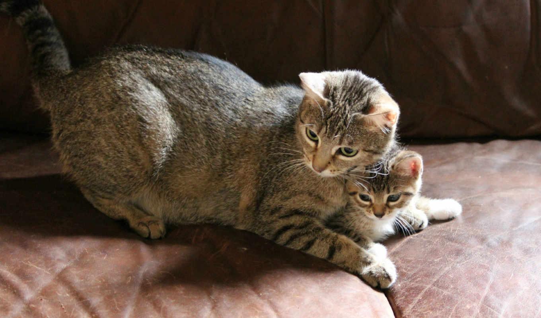 cats, cat, часть, desktop, free, животные, от, download, выпуски,