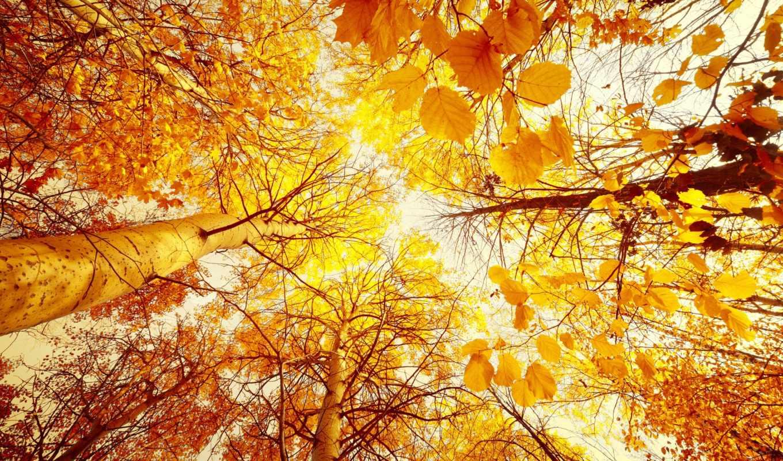 осень, деревья, листья, вверх, снизу, лес, красивые, желтые, солнце, природа, trees,