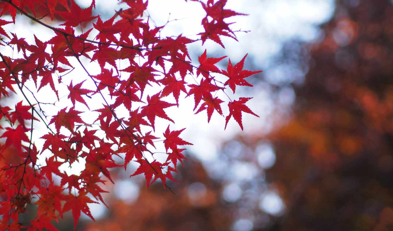 осень, листья, смотреть, обою, размере, истинном, нов,