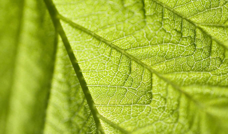 лист, макро, метки, зелёный,
