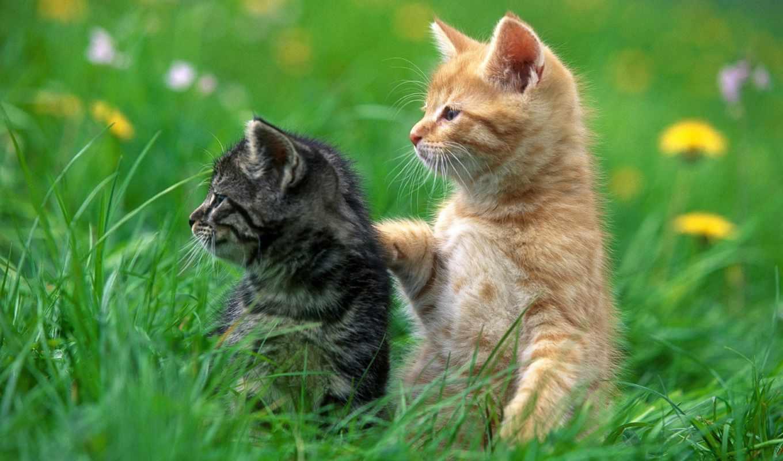 красивые, животных,