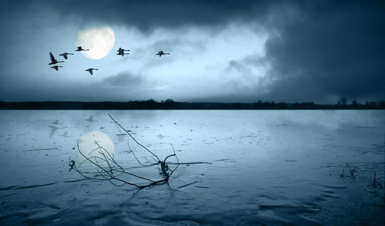 озеро, попугай, птицы, winter, льдом, покрытое, полет, птиц, утки, со, озером,