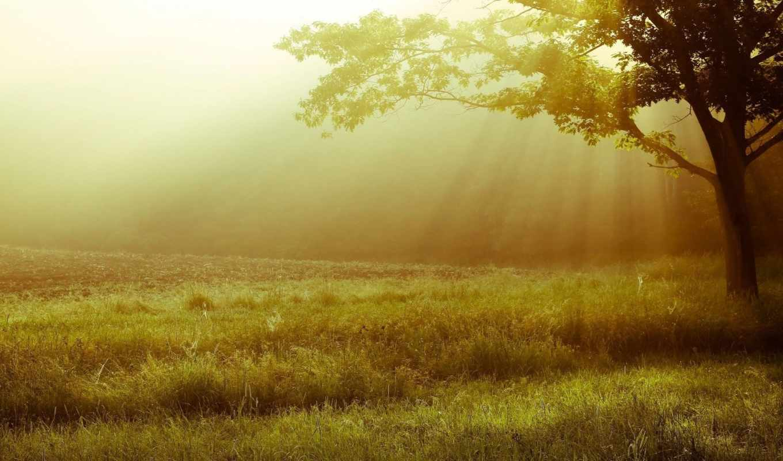 листья, дерево, трава, фон, trees, landscape, природа,