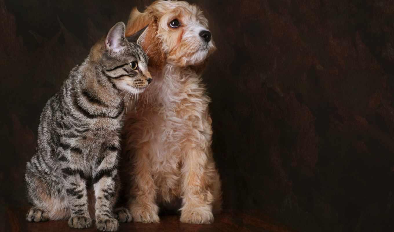 дружба, кот, собака, высоком, кошки, щенок, котенок, друзья,