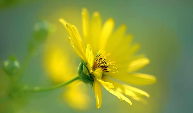 вырасти, цветы