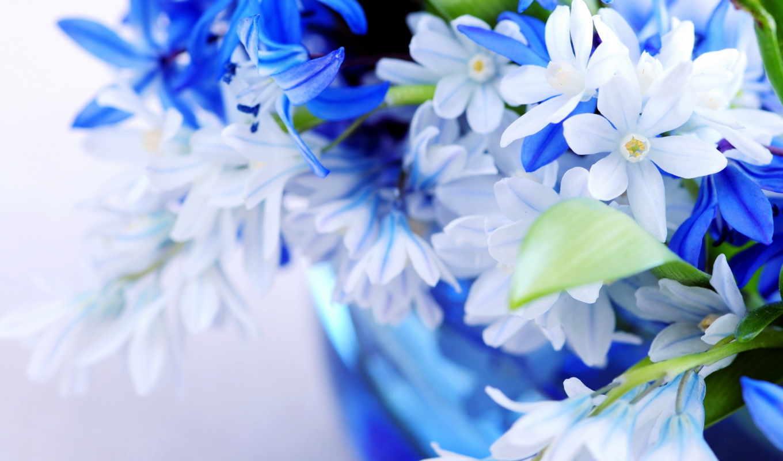 цветы, голубой, букет, листки, нежно, цвет,