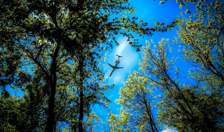 небо, деревя, самолёт, небе, лес, верхушки,