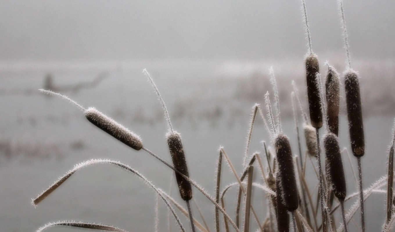 осень, камыши, поздняя, озеро, зимы, горы, winter, трава, утро, лесу, preview,