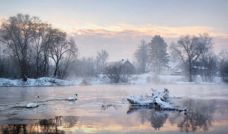 лебеди, озеро, читы,