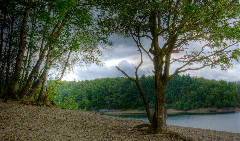 природа, реки, германия, березы, россия, бавария, деревья,