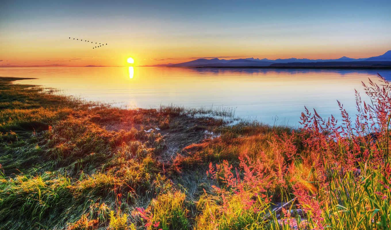 закат, берег, birds, трава, озеро, pack,