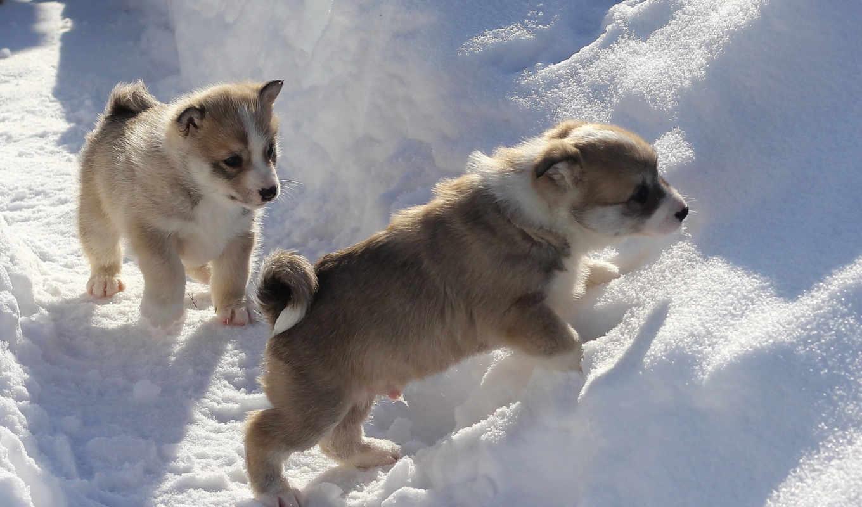 картинка, снег, world, animal, winter, zhivotnye, собаки, природа, мб,