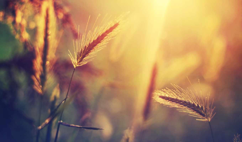 трава, макро, sun, блики, свет, фоны, verano, summer, full, песочница, pantalla,