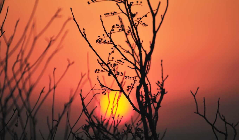 закат, sun, силуэт, color, растение, небо, цветы, sunlight, makryi, gradient