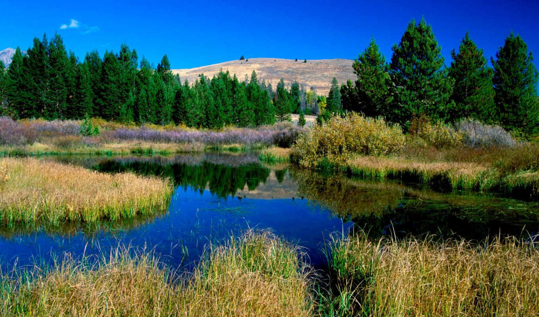 beaver, ponds, sun, idaho, valley, herunterladen,