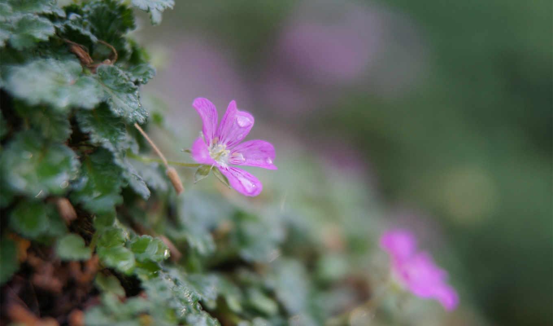 зелень, цветы, растения, листья,