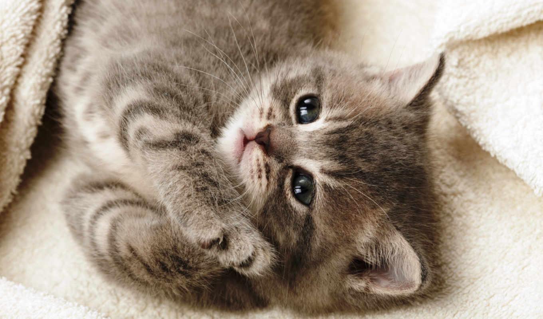 мед, котенок, лапки, лежит, кот, mine, you, страница, ответить, июня,