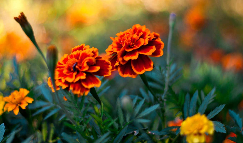 цветы, растения, pin, цветные, pinterest,
