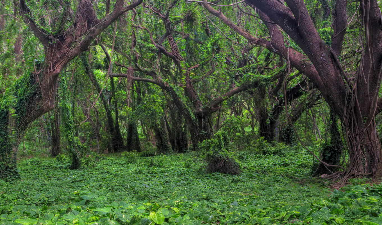 alam, pemandangan, natural, gambar, alami, фотографи, allam, foto,