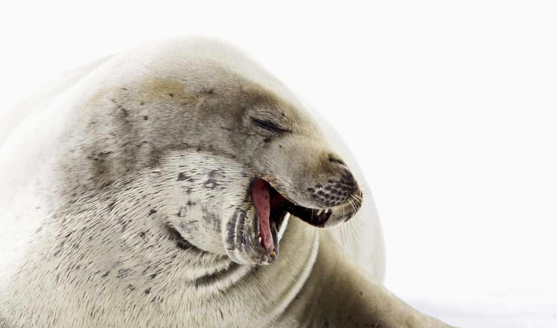 you, череп, море, очень, найти, может, тюлень, принадлежать, зверюге,