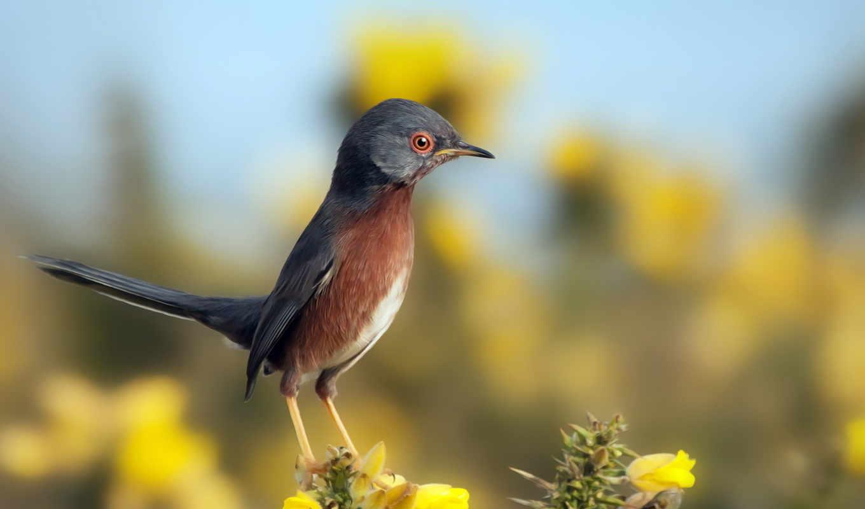 птица, макро