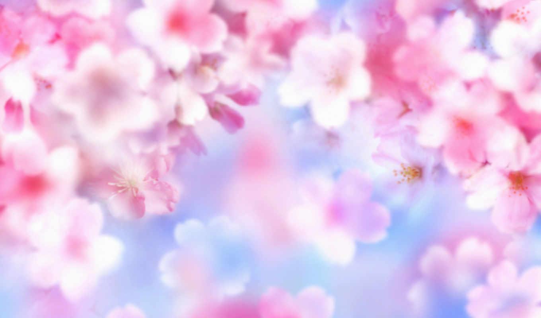 цветы, лето, яркость, марта, картинка, кнопкой, رومانسية,