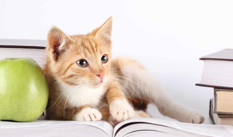 кот, книгу, читает,