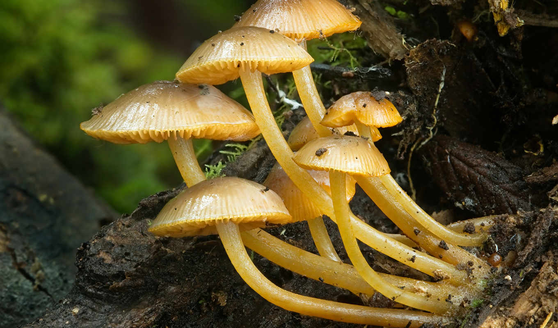 opisthokonta, заднежгутиковые, грибы, опистоконты, lat, другие, разнообразие, zhivotnye, царства, обширная,