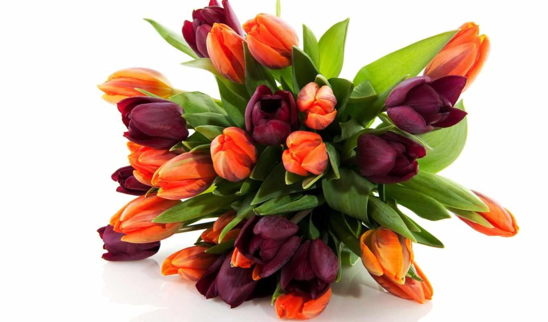 тюльпан, клипарт, cvety, прозрачный, png
