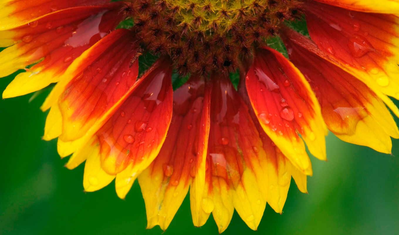 цветы, otzyv, pic