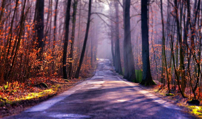 дорога, туман, осень, лес, картинка, картинку,