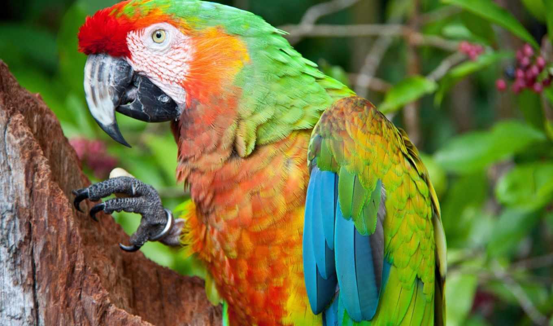 попугай, ara, faq常见问题, научить, попугая, talk, ли, кроликов, порода, уход, стоит, кастрировать, кота, content, кошками, за, птица,
