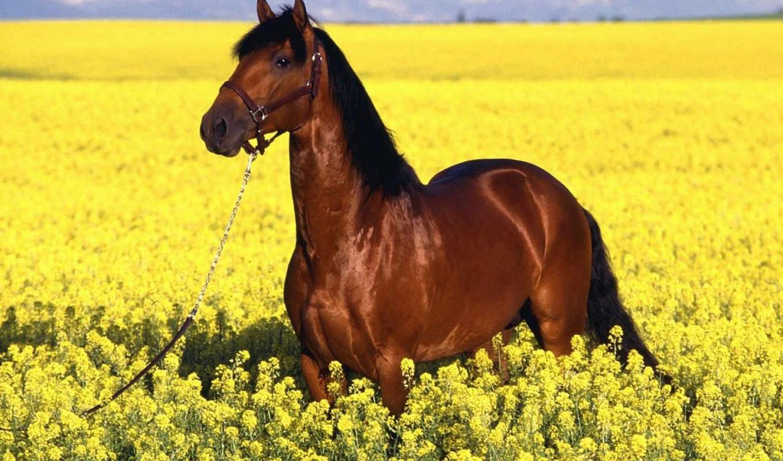 лугу, лошадь, лошади, лошадей, желтом,