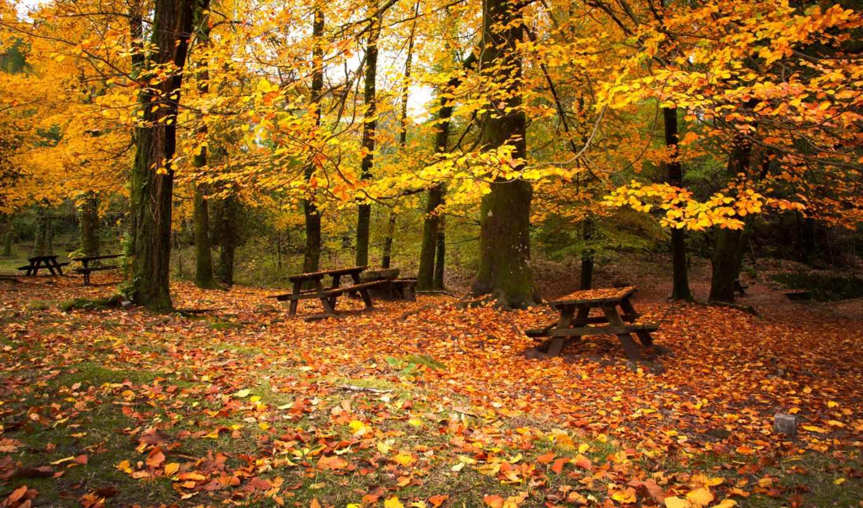 sz, осень, erdő, natti, vogel, старом, őszi, caesarom, crown, парке, царствовала,