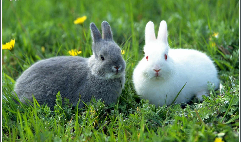 images, animals, animal, white, brown, rabbits, photos, small, inzerce, je, göre, yemek, excellent, breathtaking, кролики, eti, bunnies, tavşan, image, кроликов, krolik,