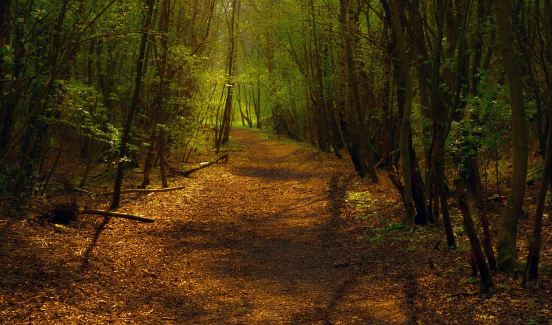 лес, поворот, дорожка, тропа, свет, деревья, путь, смешанный, листва, тени,