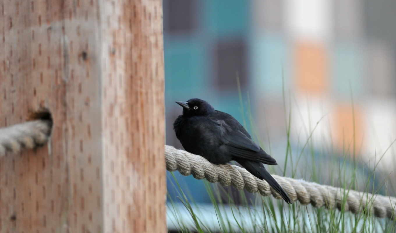 животные, птичка, черная птица, сидит