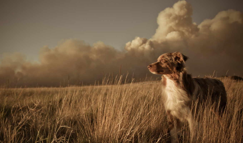 собака, поле, друг, закат, oblaka, landscape, ветер, трава,